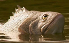 Geico Commercial: Fish