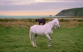 Newfoundland and Labrador Tourism Video