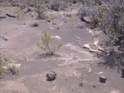 Hawaii Volcanoes NP: Footprints in the Lava