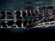 Nat Geo Wild Channel Video: Alligator