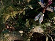 Sarenza Commercial: Jungle