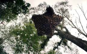Nat Geo Wild Channel Video: Gnu