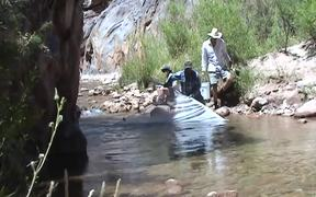 GCNP: Humpback Chub Translocation to Shinumo Creek