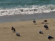 Birds at the Beach Side