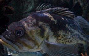 An Odd Fish