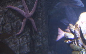 A Cool Looking Starfish