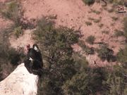 Grand Canyon NP: Condors at the South Rim
