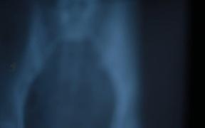 Xray 8 Pack Jolts & Blurs