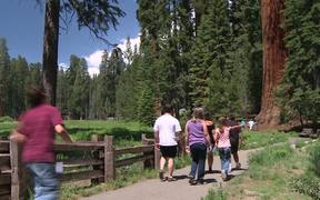 Sequoia & Kings Canyon NP: Healing Natural Systems