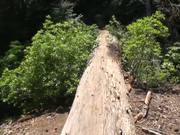 SKCNP: Redwood Mountain Virtual Tour Part 2