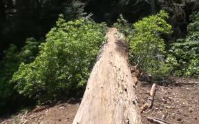 SKCNP: Redwood Mountain Virtual Tour Part 2