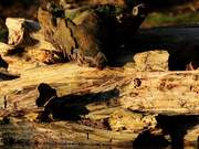 Rotting Log on Water Close Up