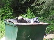 Cumberland Gap NHP: Is Your Trash Secure?
