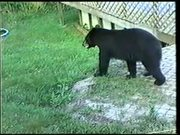 Cumberland Gap NHP: Black Bears in Kentucky