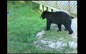 Cumberland Gap NHP: Black Bears in Kentucky