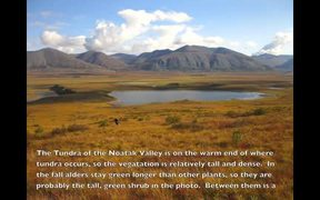Gates Of The Arctic NP: Tundra Landscapes