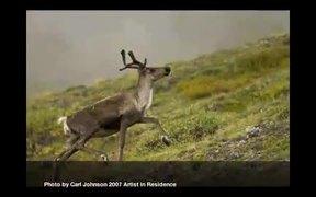 Gates Of The Arctic National Park: Caribou