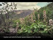 Gates Of The Arctic National Park: Wildflowers