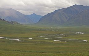 Gates Of The Arctic NP:Caribou-The Migration South