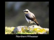 Gates Of The Arctic National Park: Bird Songs