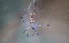 Spider Caught a Fly