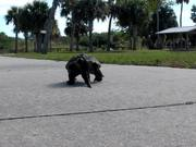 Cute Turtle Walking