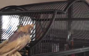 Bobby Bird Bouncing Dancing Featherless LARC 081