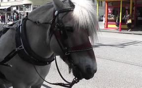 Carriage Horse Tourism Alaska Mohr Productions