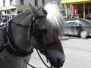 Carriage Horse Tourism Alaska Mohr Productions