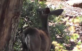 Deer From Behind Eating Leaves Julian