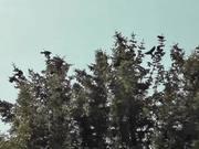 Dozens of Birds Cover Tree Alaska
