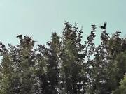 Dozens of Birds Cover Tree Alaska