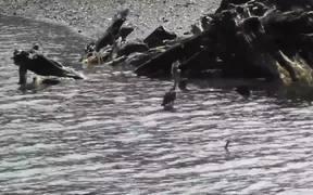 Drive By Birds In Water Alaska