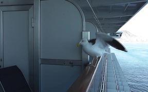 Feeding Seagull On Side Of Ship On Rail