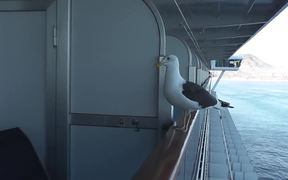 Feeding Seagull On Side Of Ship On Rail