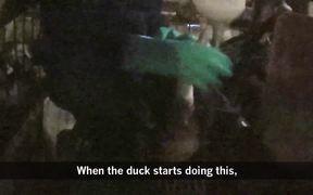Foie Gras Hudson Valley Duck Cruelty Undercover