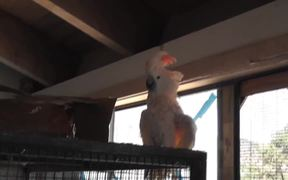 Parrot White And Orange On Cage LARC