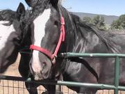 Premarin Horse Rescued LARC