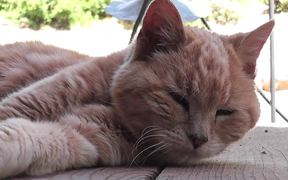 Red Cat Close Up Older Rescued