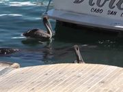 Sea Lion Head Close Up In Water Cabo San Lucas