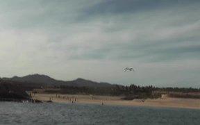 Seagulls Flying Near Ship Cabo San Lucas