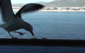 Seagull Eating Crackers On Ship Rail Boat Behind