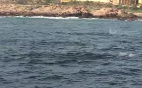 Several StingRays Jumping Out Of Ocean