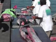 Swordfish Cutting Up Cabo San Lucas