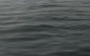 Stingrays Flying Fish CaboSanLucas 2014