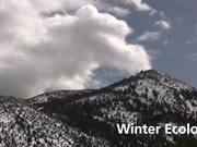 Great Basin NP: Winter Ecology Ranger Minute