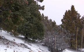 Great Basin NP: Winter Ecology Ranger Minute
