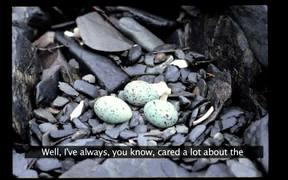 Kenai Fjords NP: Researching Black Oystercatcher