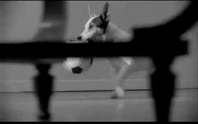 SPDR Exchange Traded Funds: Dog