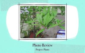 Project 5 Plants and Nature